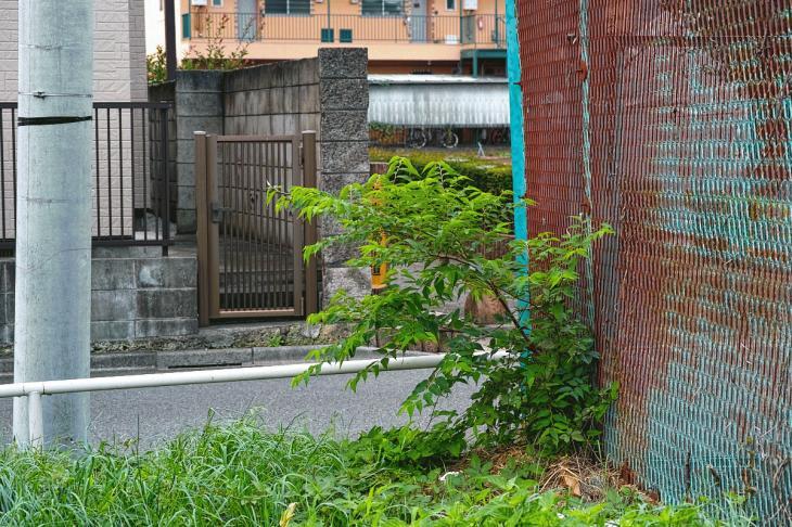 160903中仙川-20.jpg