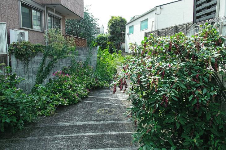 160903中仙川-55.jpg