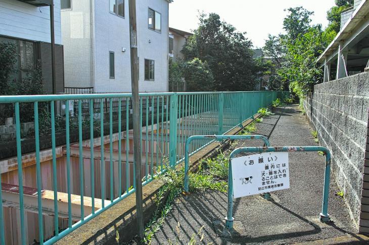 160910入間川-32.jpg