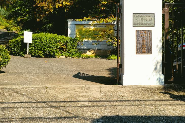 koishikawa-1.jpg