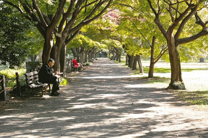 koishikawa-12.jpg