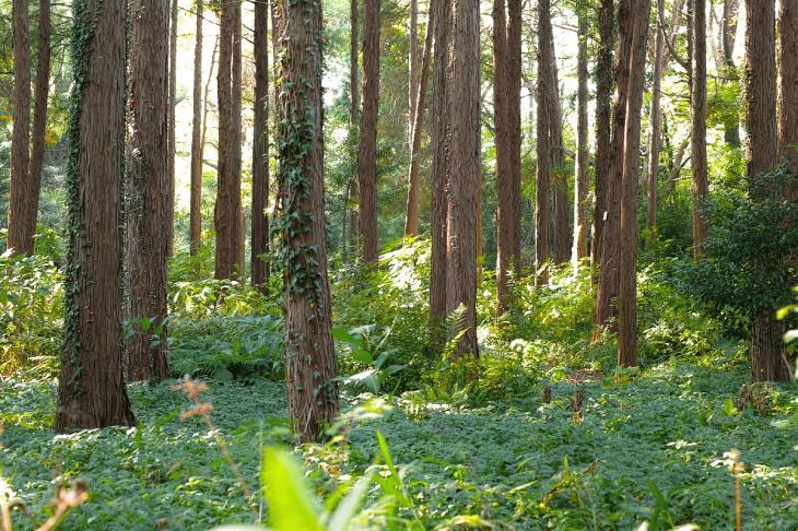 koishikawa-15.jpg