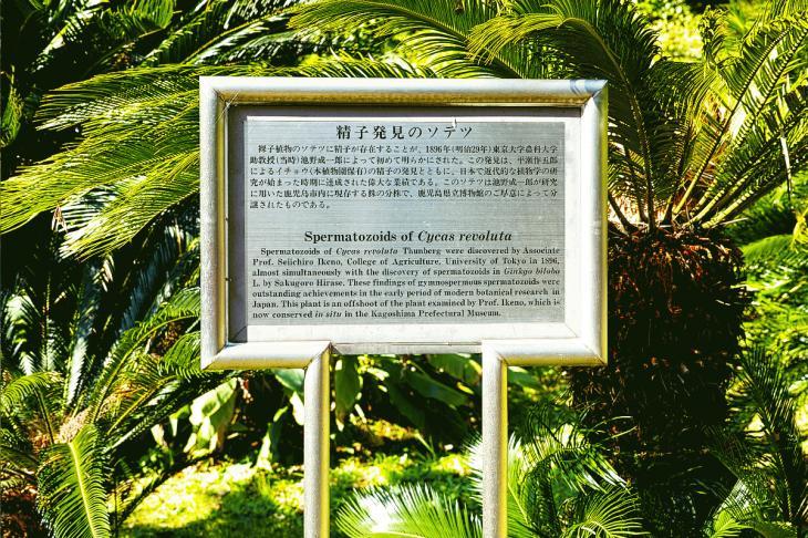 koishikawa-2.jpg