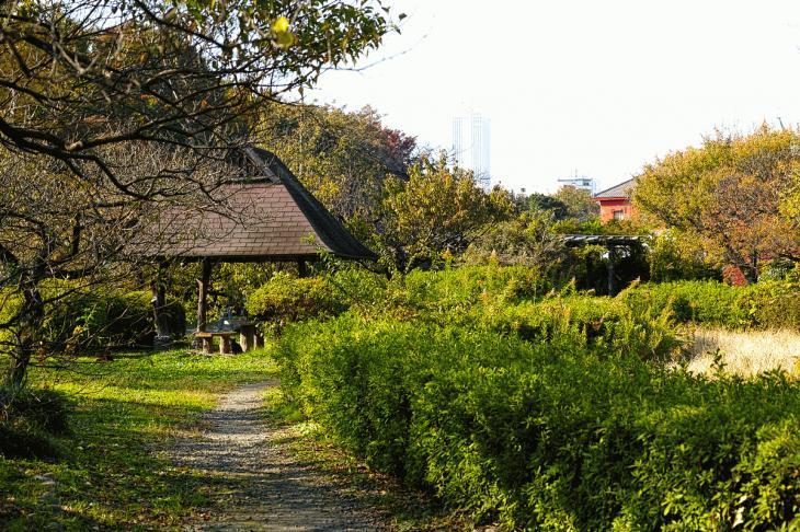 koishikawa-24.jpg