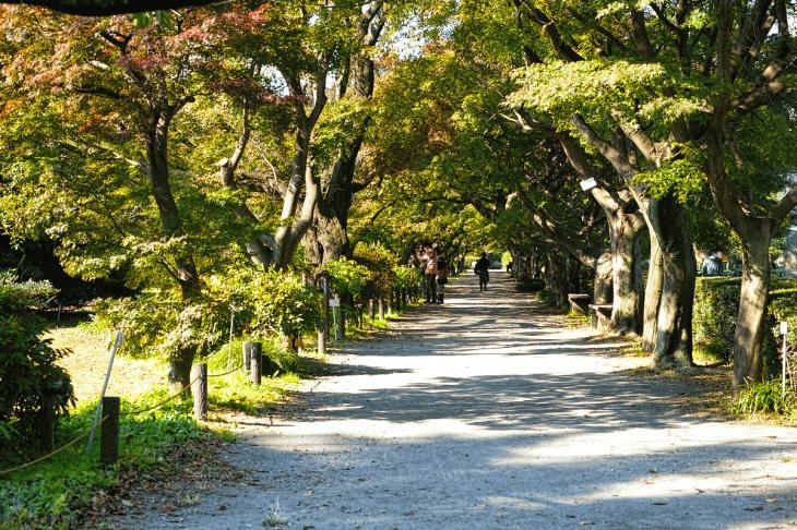 koishikawa-5.jpg