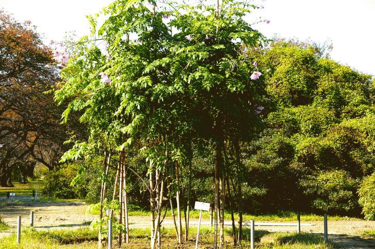 koishikawa-7(kodatidaria).jpg