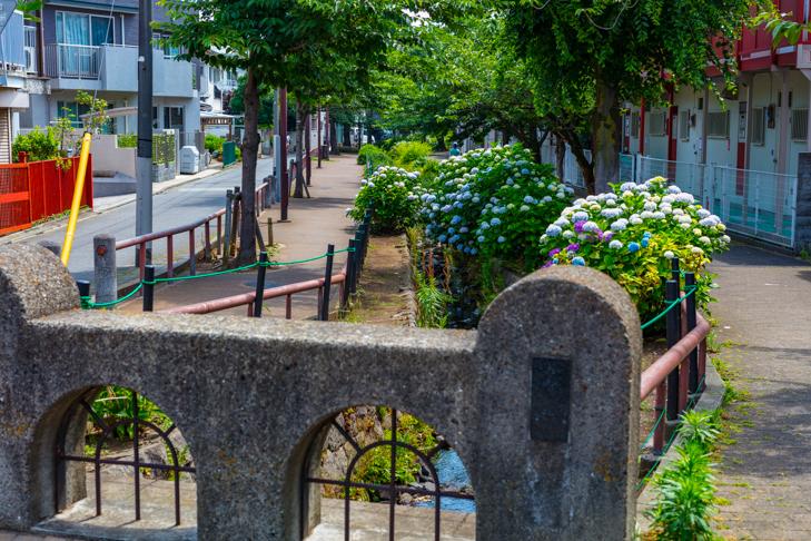 北沢川緑道-140.jpg