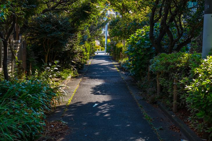 北沢川緑道-37.jpg